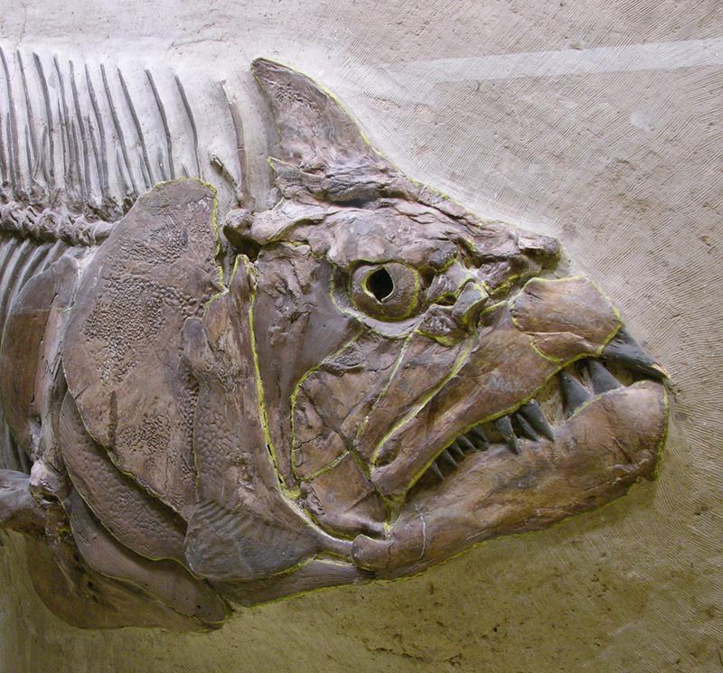 Fish Fossil image